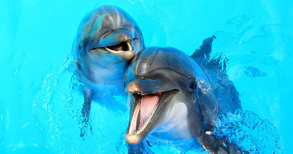 dolphin images for desktop