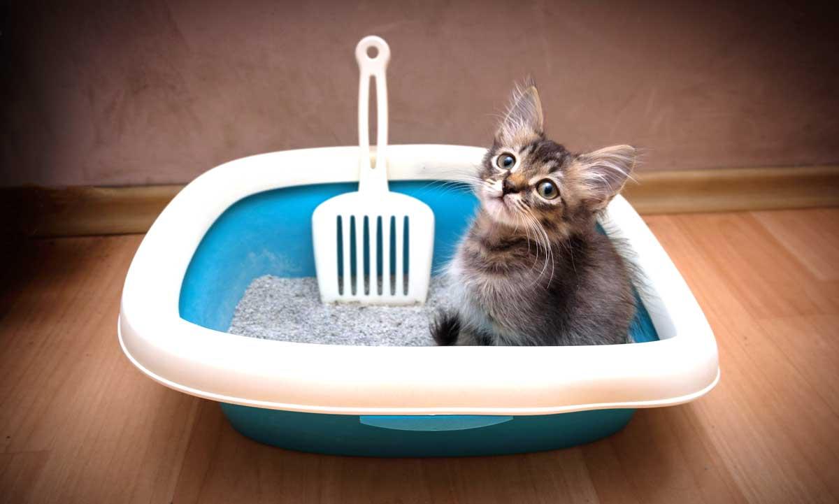 Wie bekommt man ein Kätzchen stubenrein?
