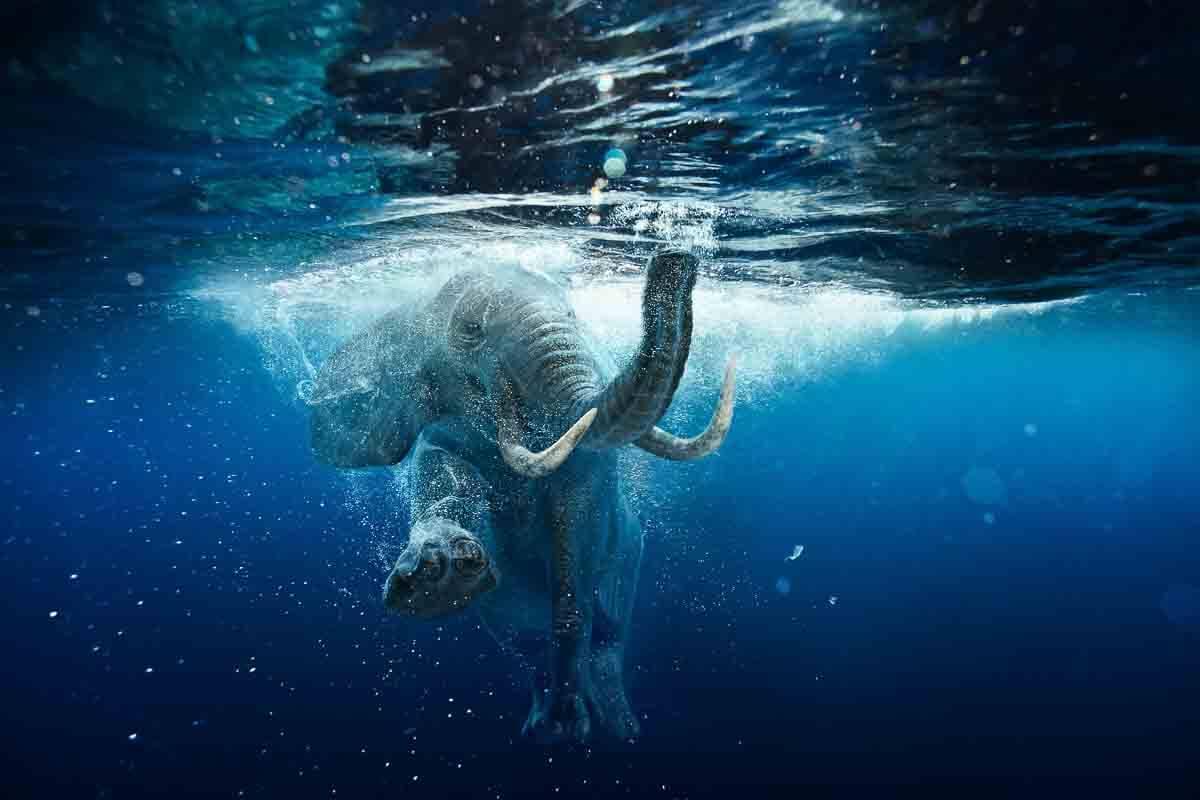 Schwimmender Elefant Unterwasser